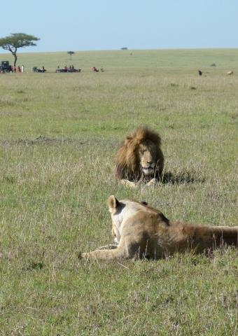 Kenia - weite Savannen und weiße Strände