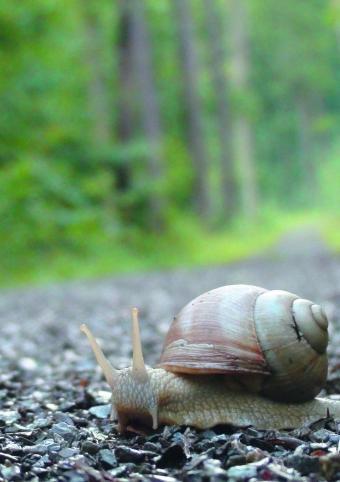 Slow - Langsam ist das neue Schnell - Ein Schnecken-Tag